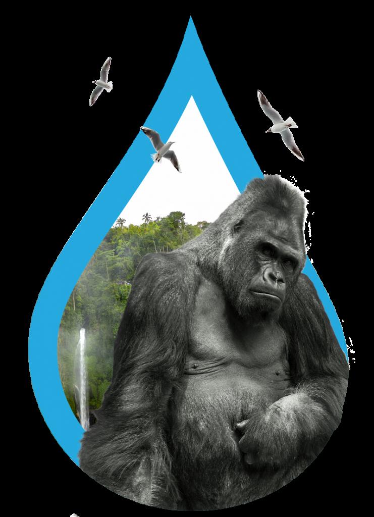 Gorilla in amazon rainforest